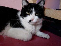 Leica, chat Gouttière