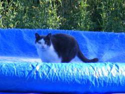 Gribou, chat Gouttière