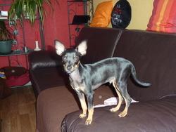 Garou, chien