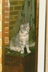 Haya, chat Gouttière