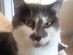 Daisy, chat Gouttière