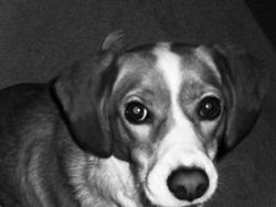 Cannelle, chien