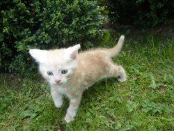 Dalton, chat Gouttière