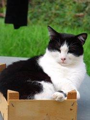 Suki, chat Gouttière