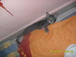 Toumay, chat Gouttière