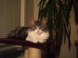 Sasha, chat Gouttière