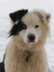 Eden, chien