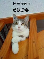 Eros, chat
