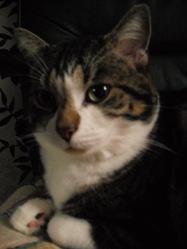 Chachou, chat Gouttière