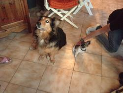 Pirate, chien