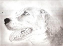 Canela, chien Beagle