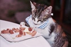 Minnie, chat