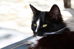Poussy-Kit, chat