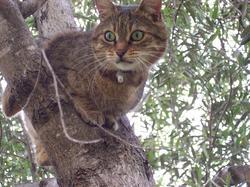 Chaussette, chat Gouttière