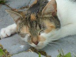 Cali, chat Gouttière