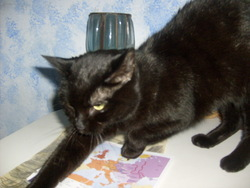 Sachka, chat Gouttière