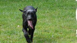 Ushuaia, chien