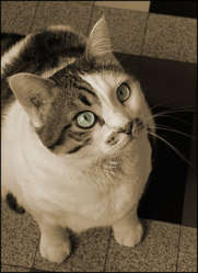 Mya, chat Gouttière