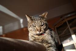 Psycopat, chat Gouttière