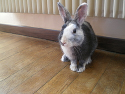 Snickers, rongeur Lapin