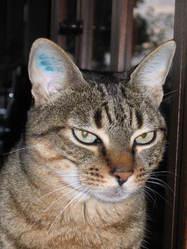 Roupie, chat Gouttière