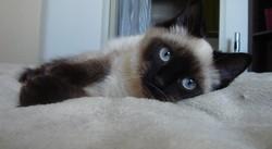 Farenza Zaza, chat