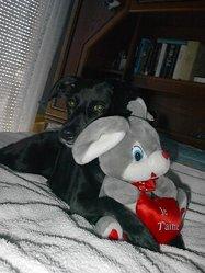 Triskell, chien