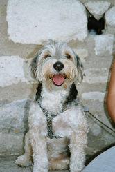 Titof, chien