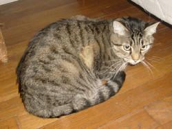 Tournesol, chat Gouttière