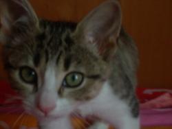 Fifi, chat Gouttière