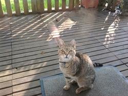 Owen, chat Gouttière