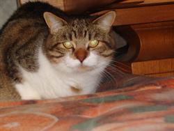 Ramelle, chat Gouttière