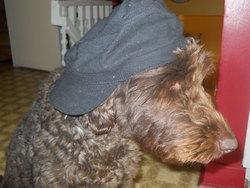 Johnny, chien Caniche