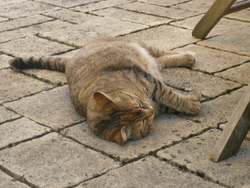 Mina, chat Gouttière