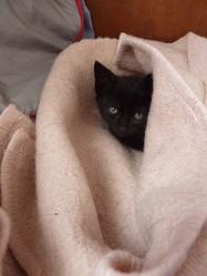 Rio, chat Gouttière
