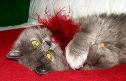Poupée Fanny, chat Persan