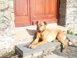 Loona, chien