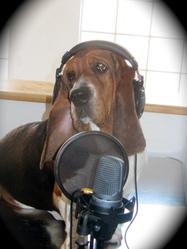 Diesel, chien Basset Hound