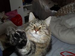 Benny, chat Gouttière
