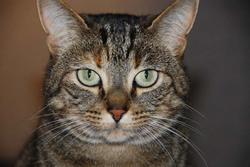 Bruce, chat Gouttière