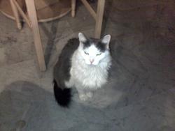 Twingo, chat Gouttière