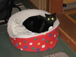 Miss Mew, chat Gouttière