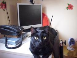 Akhesa, chat Gouttière