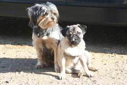 Maurice, chien