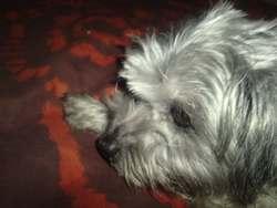 Mimi, chien