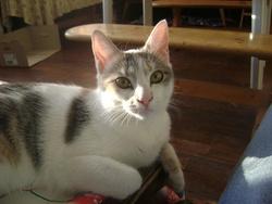 Phiby, chat Gouttière