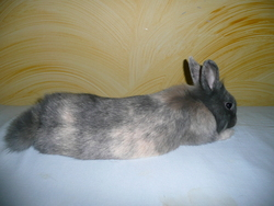 Lexy, rongeur Lapin