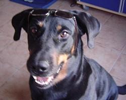 Pop, chien