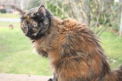 Opium, chat Gouttière