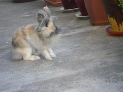 Civet, rongeur Lapin